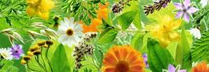 Forum-plante-medicinale