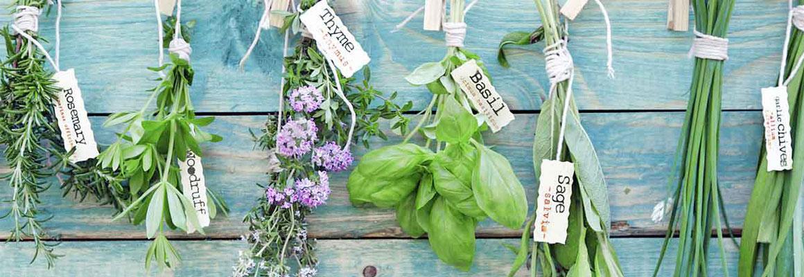 Lista-plantelor-medicinale