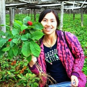 Afaceri cu plante medicinale
