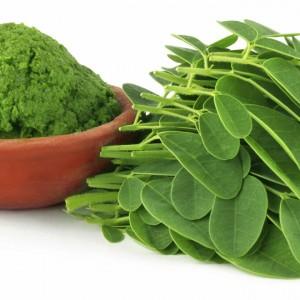 Moringa - planta medicinala