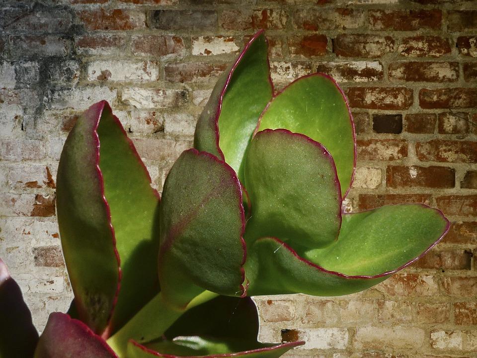Cum afecteaz plantele din interior s n tatea organismului for Plante de interior